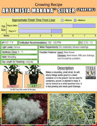 Artemisia MAKANA™ Silver - Growing Recipe