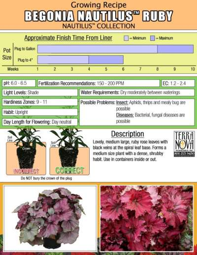 Begonia NAUTILUS™ Ruby - Growing Recipe