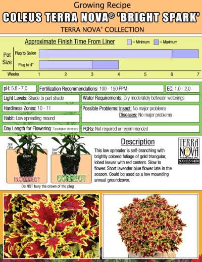 Coleus TERRA NOVA® 'Bright Spark' - Growing Recipe