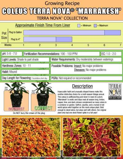 Coleus TERRA NOVA® 'Marrakesh' - Growing Recipe