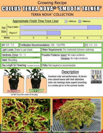 Coleus TERRA NOVA® 'Smooth Talker' - Growing Recipe