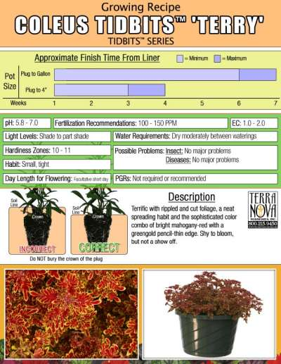 Coleus TIDBITS™ 'Terry' - Growing Recipe