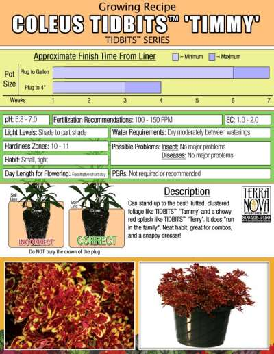 Coleus TIDBITS™ 'Timmy' - Growing Recipe
