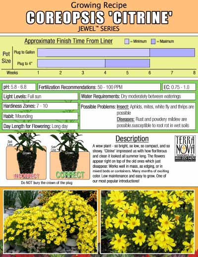 Coreopsis 'Citrine' - Growing Recipe