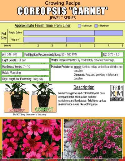Coreopsis 'Garnet' - Growing Recipe