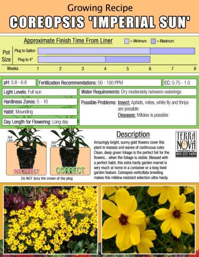 Coreopsis 'Imperial Sun' - Growing Recipe