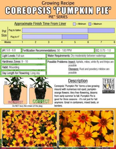 Coreopsis 'Pumpkin Pie' - Growing Recipe