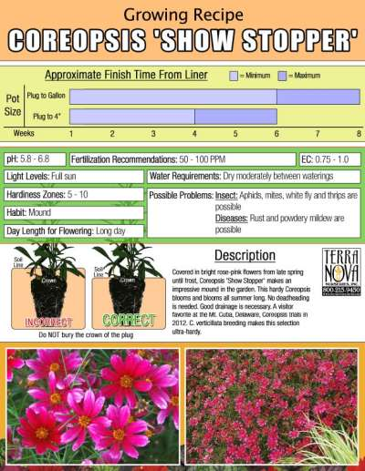 Coreopsis 'Show Stopper' - Growing Recipe