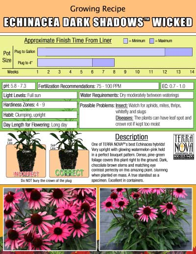 Echinacea DARK SHADOWS™ Wicked - Growing Recipe