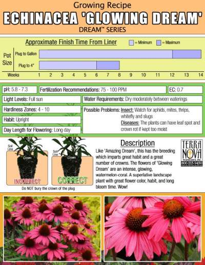 Echinacea 'Glowing Dream' - Growing Recipe