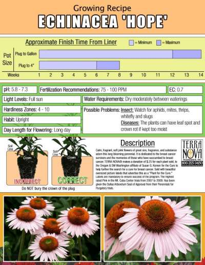 Echinacea 'Hope' - Growing Recipe