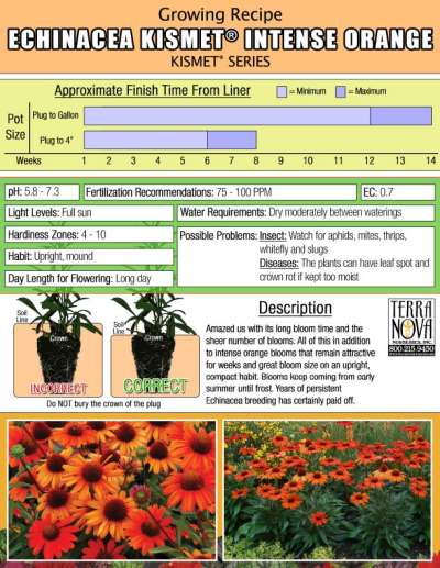 Echinacea KISMET® Intense Orange - Growing Recipe