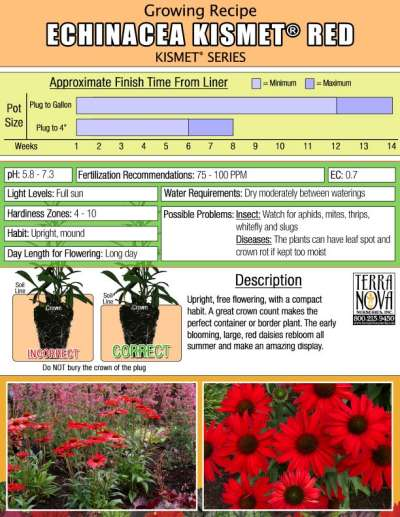 Echinacea KISMET® Red - Growing Recipe