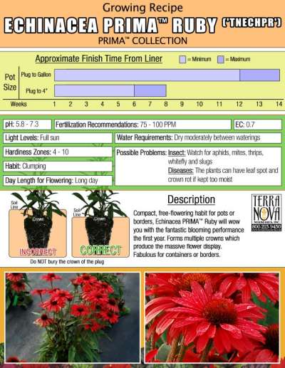 Echinacea PRIMA™ Ruby - Growing Recipe