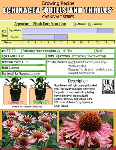 Echinacea 'Quills and Thrills' - Growing Recipe