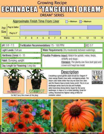 Echinacea 'Tangerine Dream' - Growing Recipe