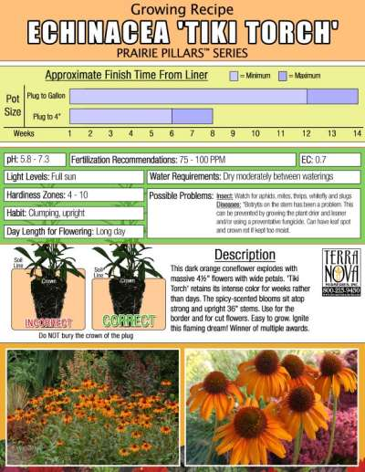 Echinacea 'Tiki Torch' - Growing Recipe