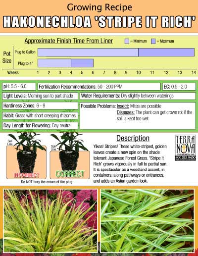 Hakonechloa 'Stripe it Rich' - Growing Recipe