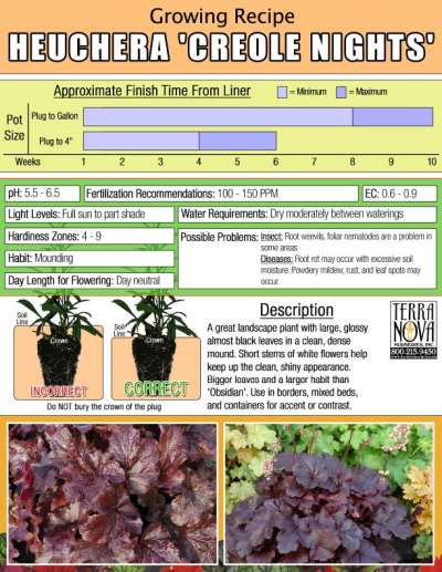 Heuchera 'Creole Nights' - Growing Recipe