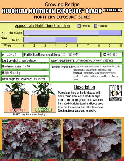Heuchera NORTHERN EXPOSURE™ Black - Growing Recipe