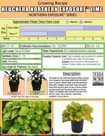 Heuchera NORTHERN EXPOSURE™ Lime - Growing Recipe