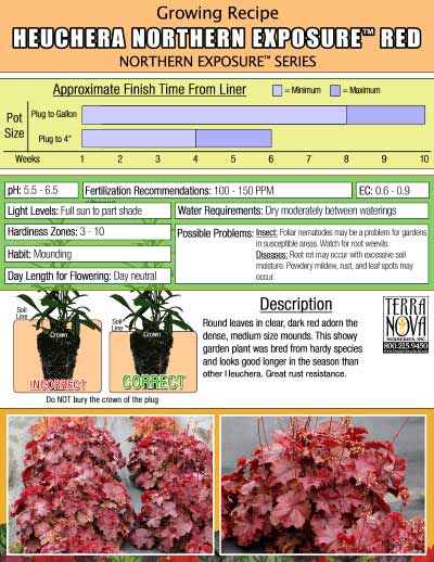 Heuchera NORTHERN EXPOSURE™ Red - Growing Recipe