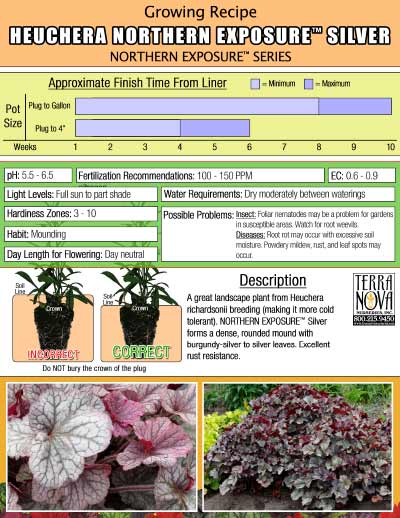Heuchera NORTHERN EXPOSURE™ Silver - Growing Recipe