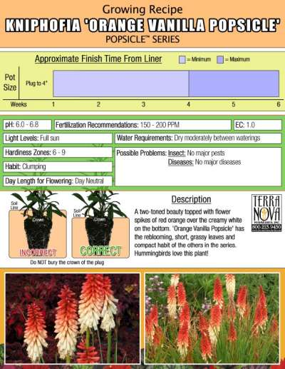 Kniphofia 'Orange Vanilla Popsicle' - Growing Recipe