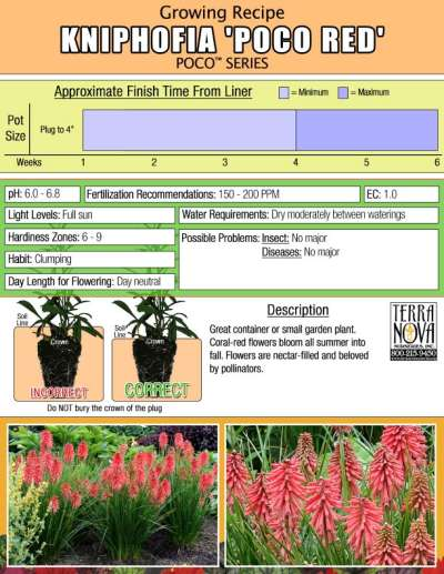 Kniphofia 'Poco Red' - Growing Recipe