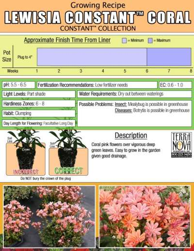 Lewisia CONSTANT™ Coral - Growing Recipe
