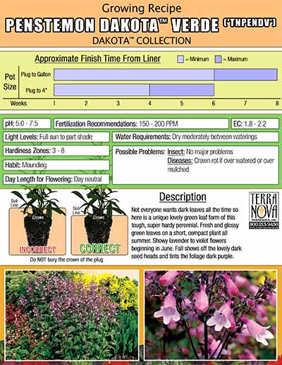 Penstemon DAKOTA™ Verde - Growing Recipe