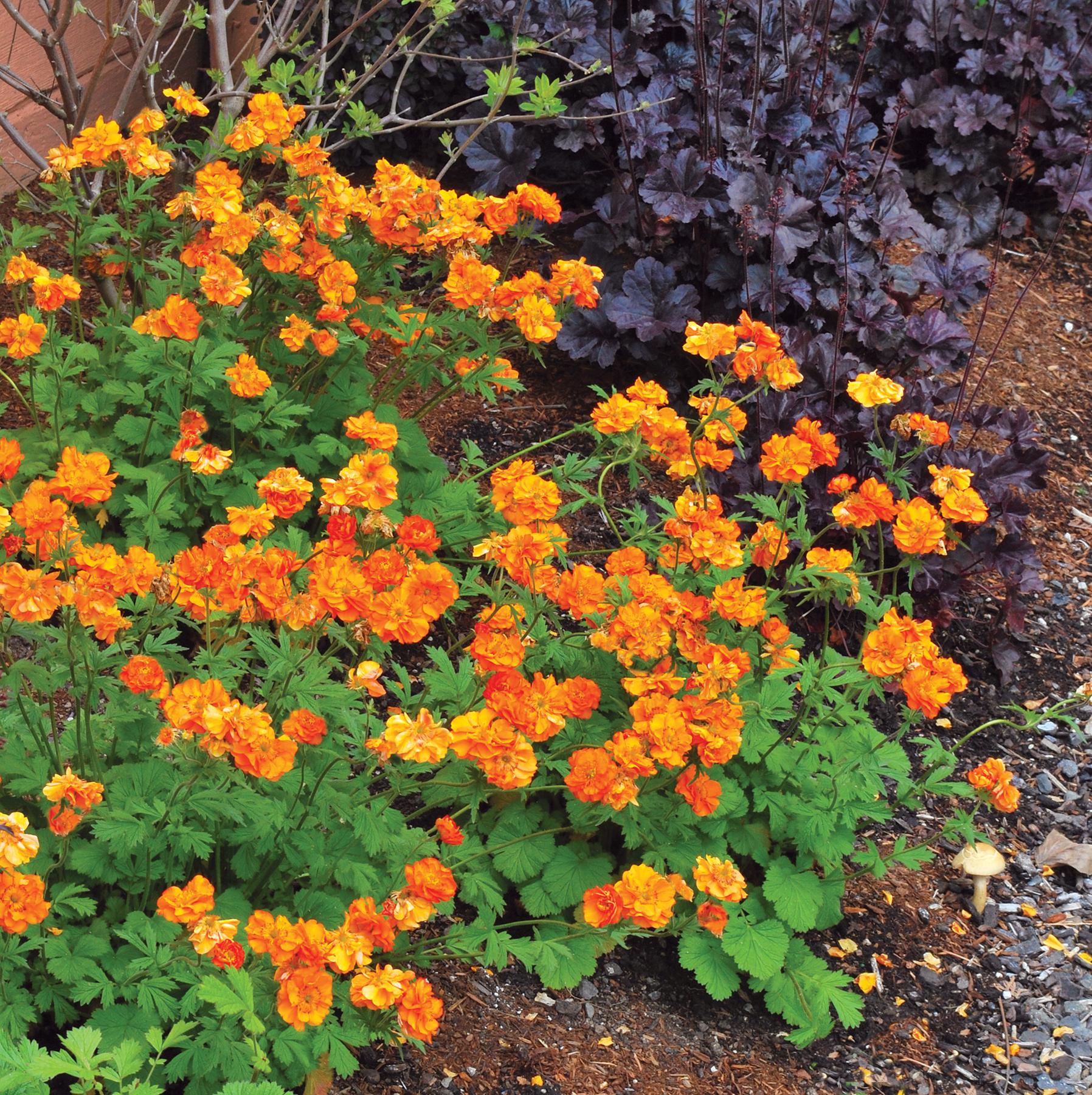 Многолетние цветы цветущие осенью фото и название