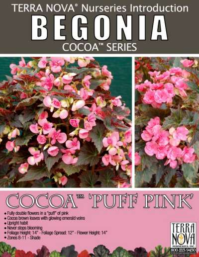 Begonia COCOA™ 'Puff Pink' - Product Profile