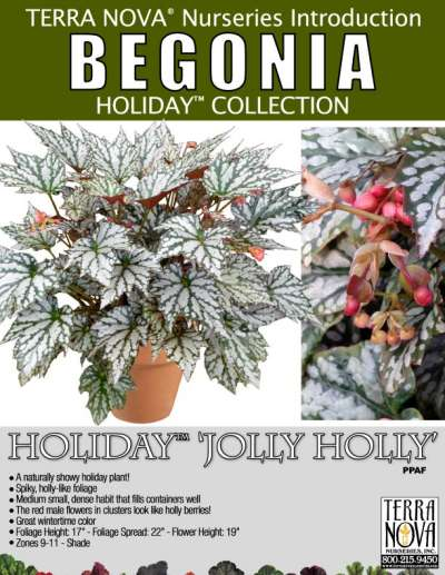 Begonia HOLIDAY™ 'Jolly Holly' - Product Profile
