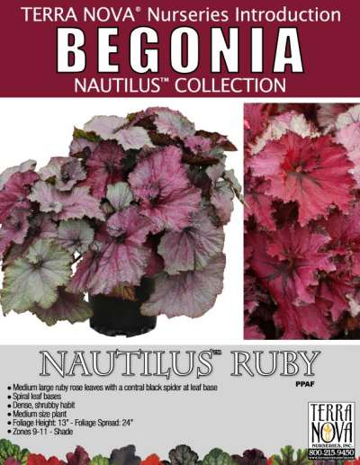 Begonia NAUTILUS™ Ruby - Product Profile