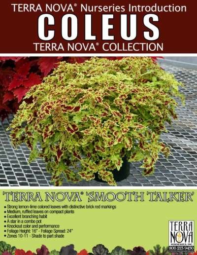 Coleus TERRA NOVA® 'Smooth Talker' - Product Profile