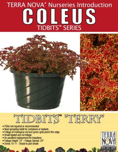 Coleus TIDBITS™ 'Terry' - Product Profile