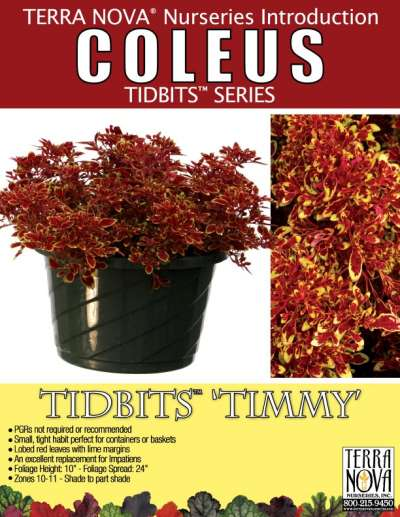 Coleus TIDBITS™ 'Timmy' - Product Profile