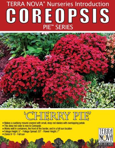 Coreopsis 'Cherry Pie' - Product Profile