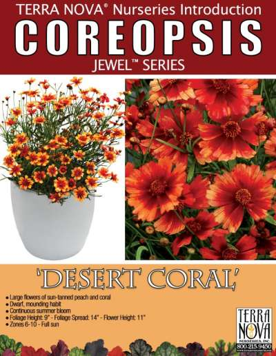 Coreopsis 'Desert Coral' - Product Profile