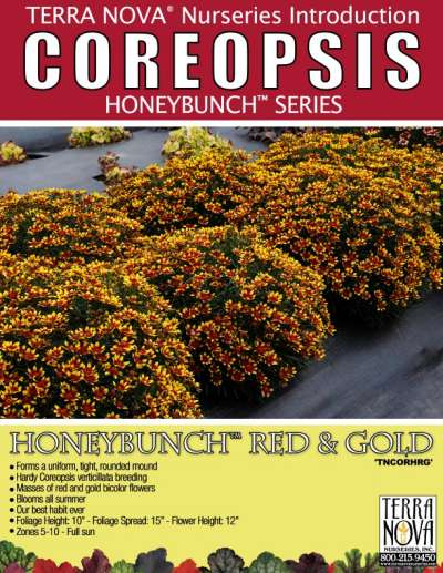 Coreopsis HONEYBUNCH™ Red & Gold - Product Profile