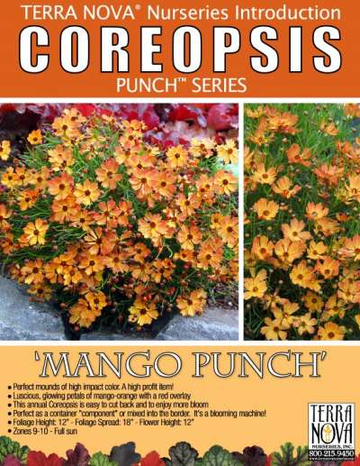 Coreopsis 'Mango Punch' - Product Profile