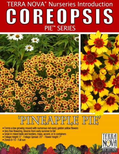 Coreopsis 'Pineapple Pie' - Product Profile