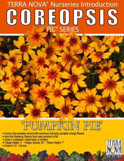 Coreopsis 'Pumpkin Pie' - Product Profile