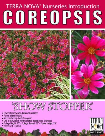 Coreopsis 'Show Stopper' - Product Profile