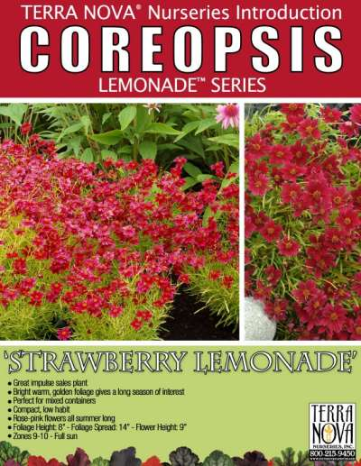 Coreopsis 'Strawberry Lemonade' - Product Profile