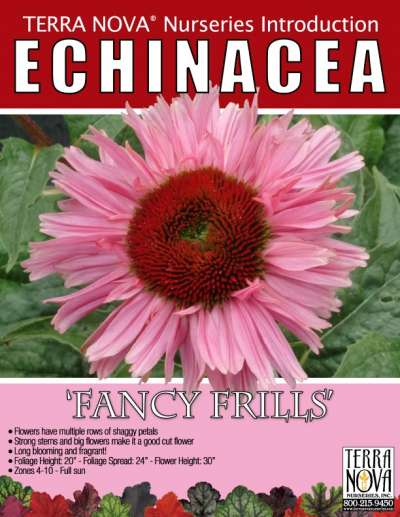 Echinacea 'Fancy Frills' - Product Profile