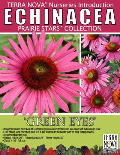 Echinacea 'Green Eyes' - Product Profile