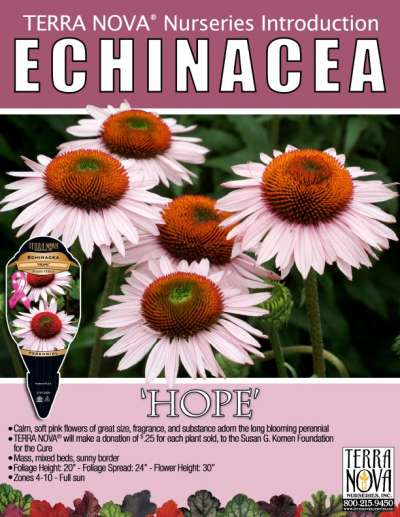 Echinacea 'Hope' - Product Profile