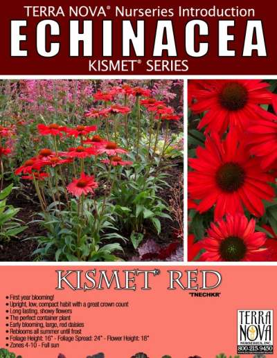 Echinacea KISMET® Red - Product Profile